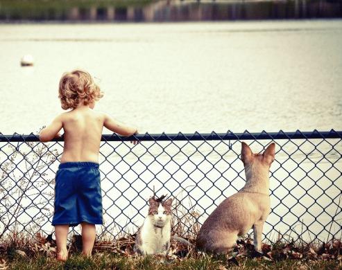 des bébés et des animaux (3)